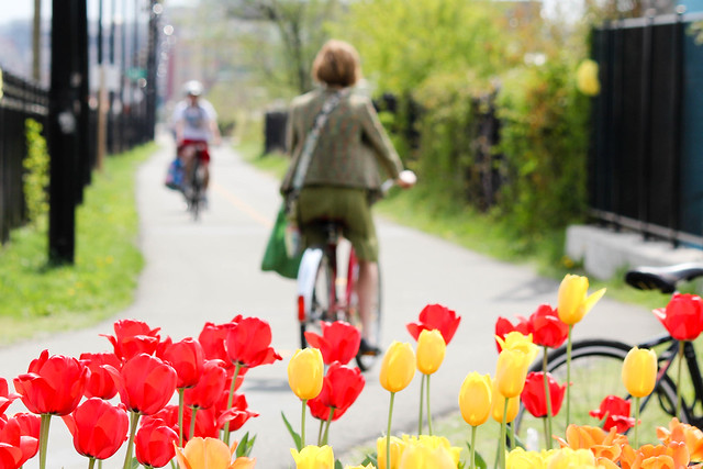 tulips and the trail
