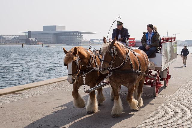 Tuborg Draft-horses