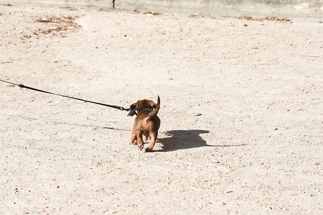 Happy puppy at Palais Royal