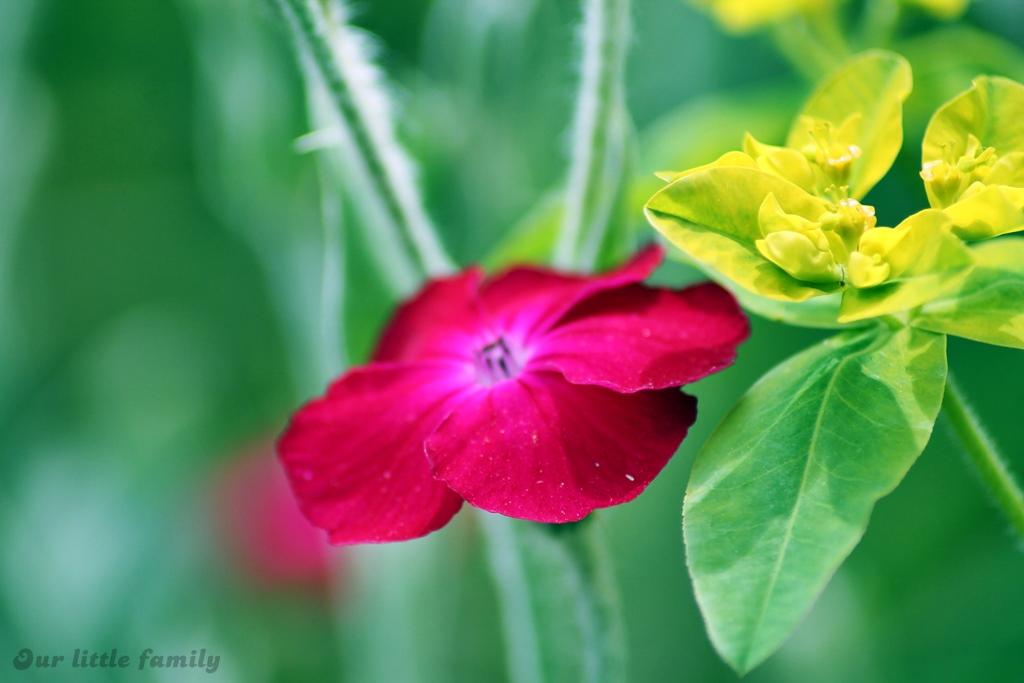 jardinprivée33