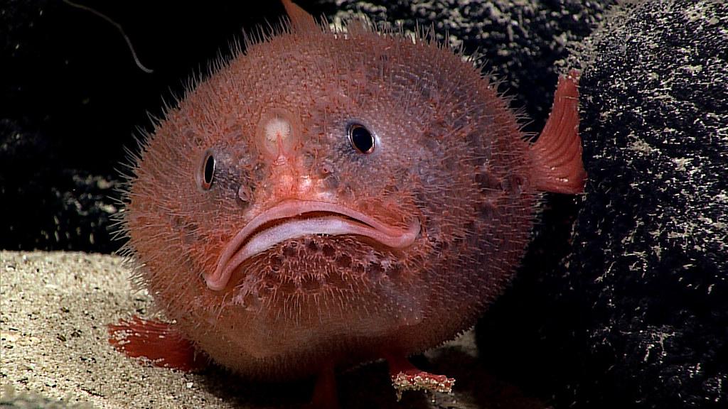 Sea Toad Знакомства
