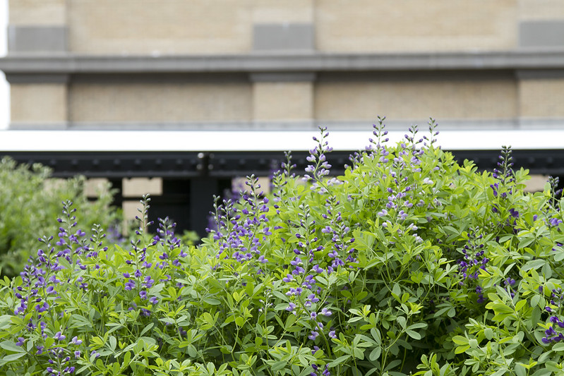 out and about: the high line | reading my tea leaves