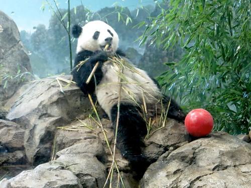 Oh look, a panda!