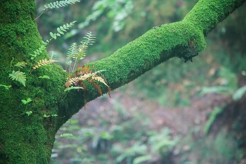 Parque Natural de #Gorbeia #DePaseoConLarri #Flickr - -868