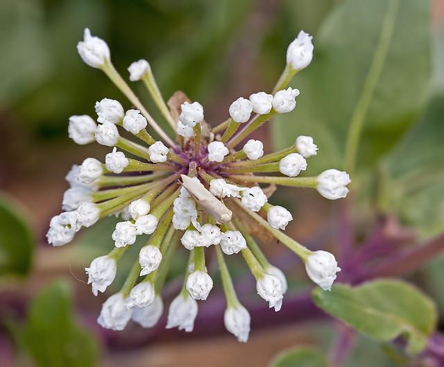 Flower 20d_1643