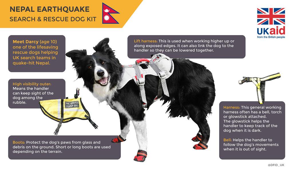 Go Rescue Pet Adoption Center Virginia Beach