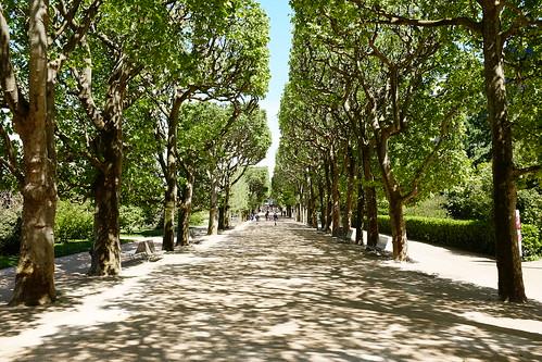 Jardin des plantes paris may 2015 fuji x100t out of for Scopitone 2015 jardin des plantes