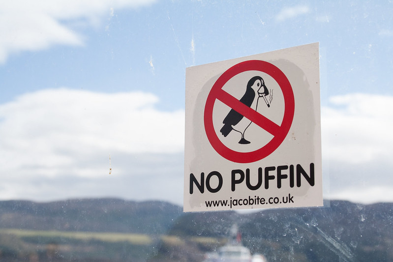 No puffin
