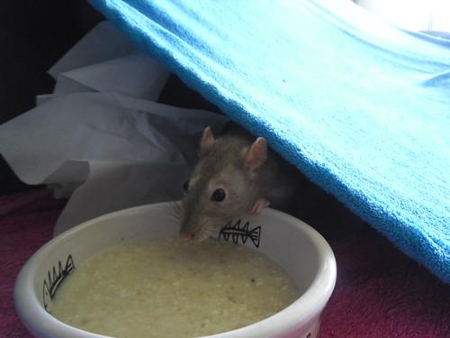 Smarties eating porridge