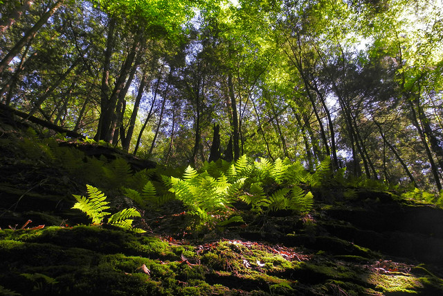 Deep in the Heart of the Emerald Forest