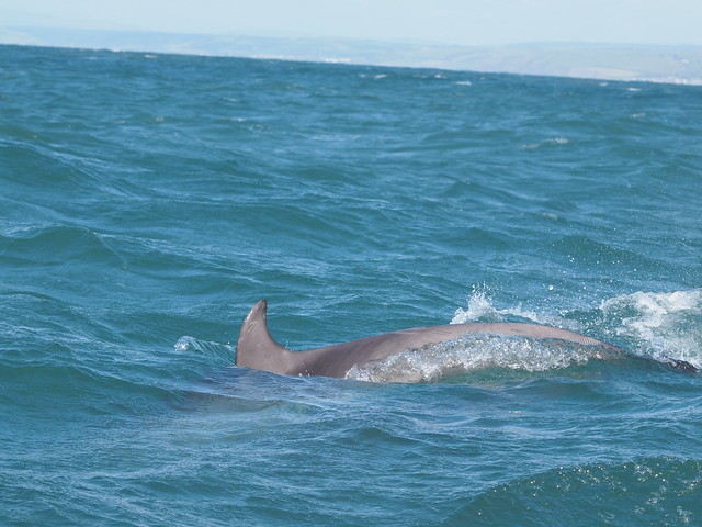dolphins 124
