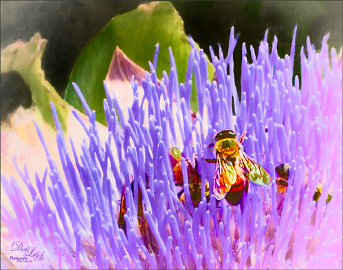 Image of a Bee in a purple succulent plant
