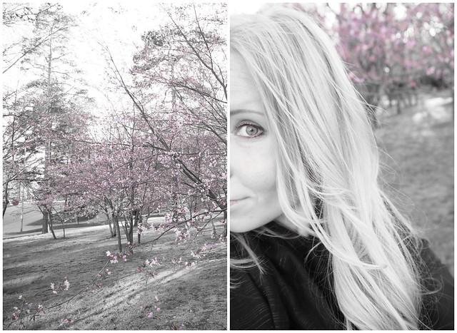 kirsikankukka1, kirsikkapuisto, roihuvuori,helsinki, visit helsinki, tip helsinki, japanese style garden, cherry park, kirsikkapuisto, japanilaistyylinen puutarha, hanami, sakura, kirsikankukat, cherry blossom, vinkit, kukat, luonto, pinkki, vaaleanpunainen, kaunis, puutarha, puisto, itä-helsinki, japani, kukat, ,