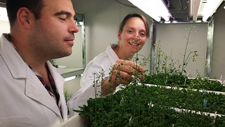 Using Supercomputing to Reveal the Molecular Structure of Plants