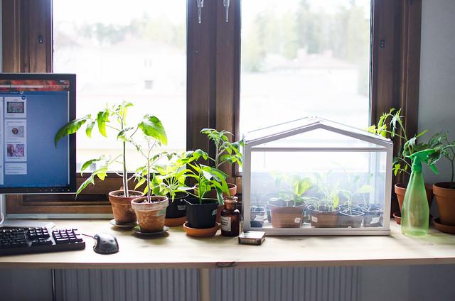 småbebisplantor