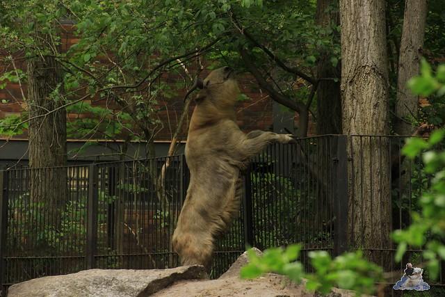 Tierpark Berlin 10.05.2015  60