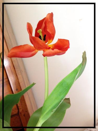 Frame for a flower