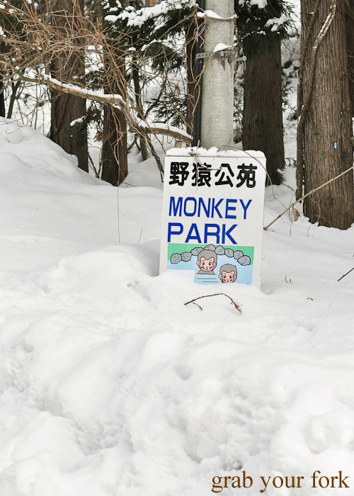 Snow at Jigokudani Monkey Park in winter