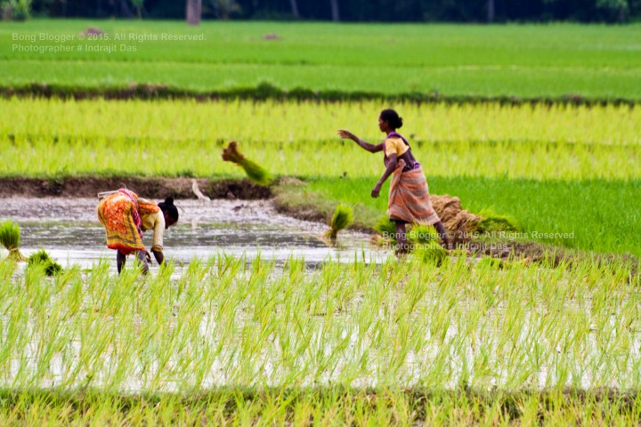 Farmers of West Bengal