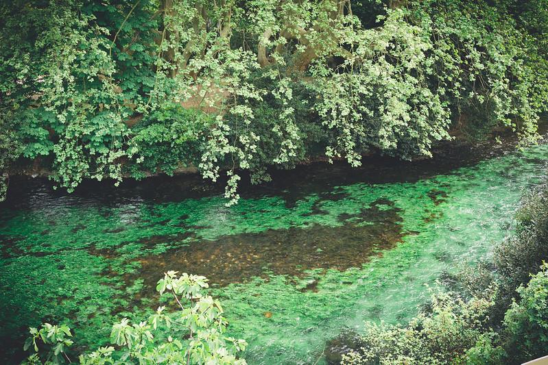 神奇的水中植物