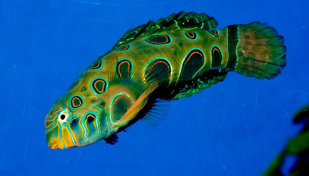 Fish_115