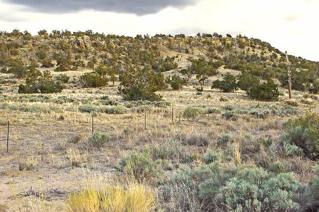 landscape 20d_1720