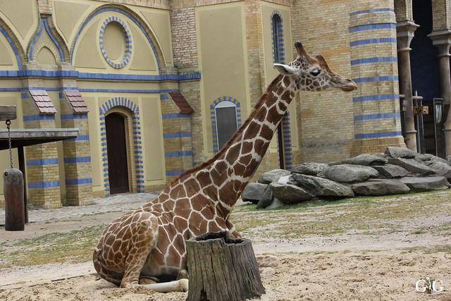 Besuch Zoo Berlin 31.05.201554