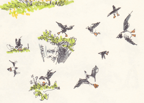 Page 29 Detail - Puffins
