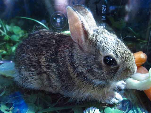 Baby Bunny #2