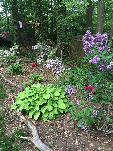 May gardens
