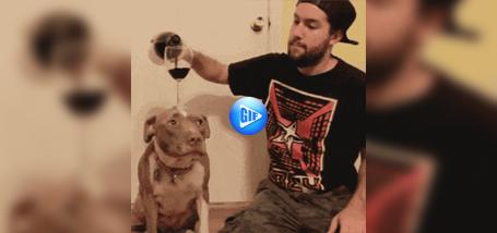 Suns, kurš var nekustīgi noturēt vīna glāzi, kamēr saimnieks to piepilda..