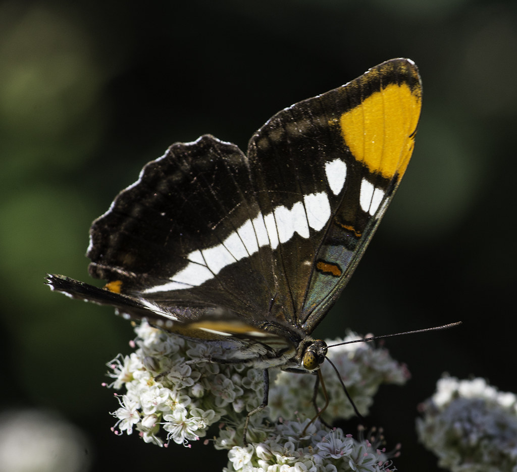 Butterfly At San Diego Botanic Garden I Don 39 T Know The