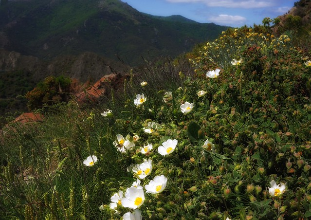 Wild flowers at the foot of the Pyrenees