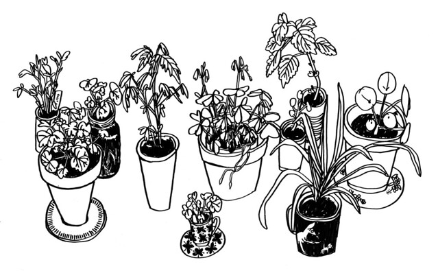 växter hos ida