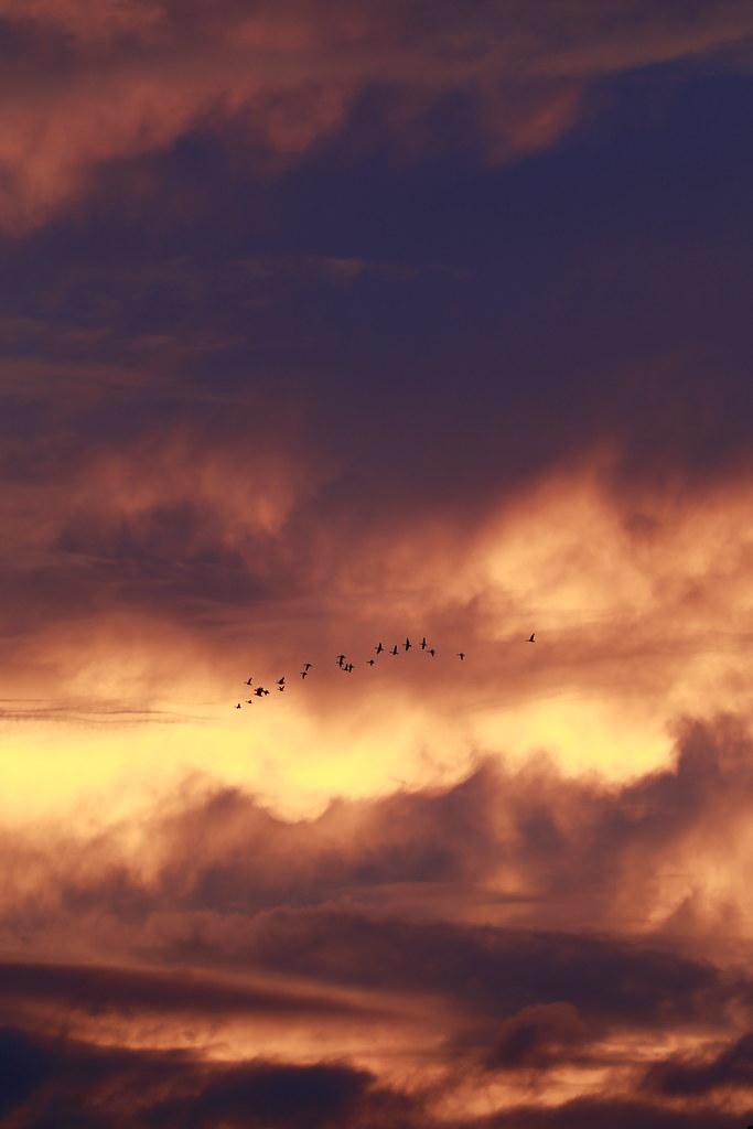 flying in a strange sky..