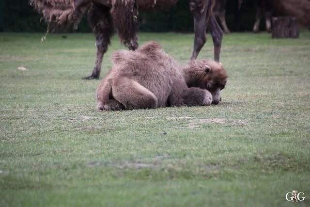 Tierpark Friedrichsfelde 17.05.201516