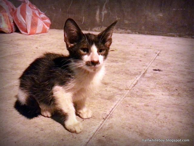 stray cats 02