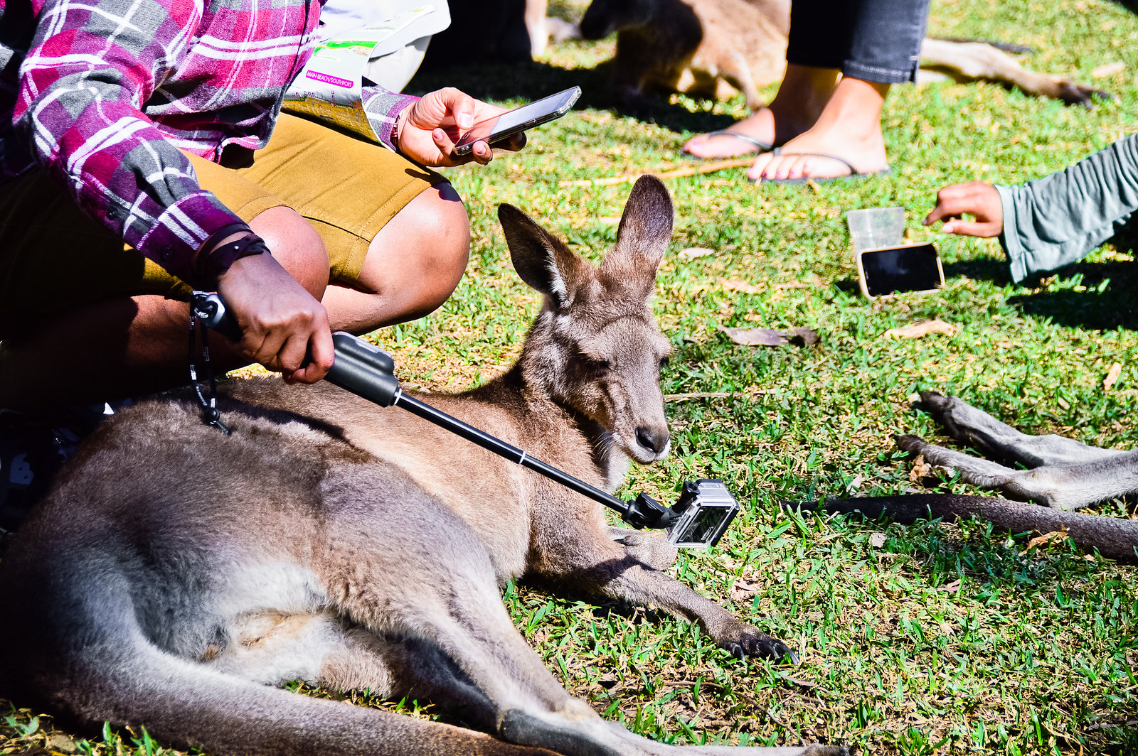 Currumbin Wildlife Sanctuary Kangaroo Selfie