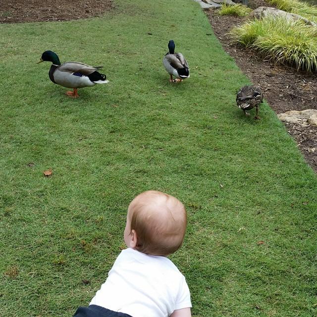 Duck Hunt. #oriongram #babysuplicki