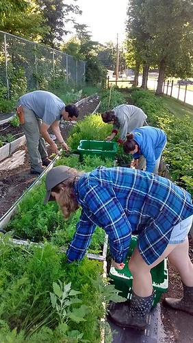 The Plenty! Farm crew harvests plots at Floyd County High School. Plenty! helped fund some of the seeds and compost for the high school program and used much of the vegetables in the Portable Produce program for families across Floyd County.