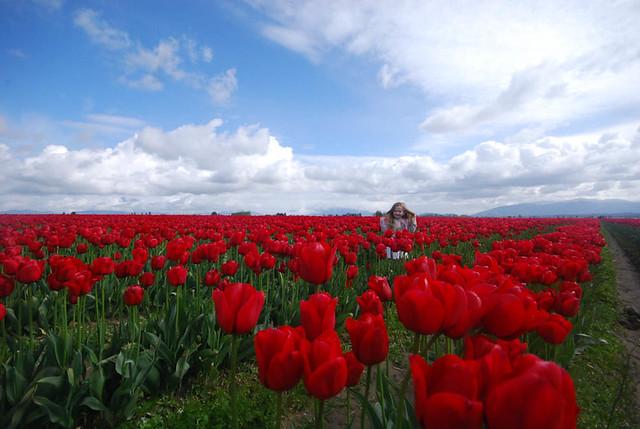 Tulipmollys