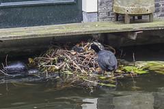 NEDERLAND - Delft 30