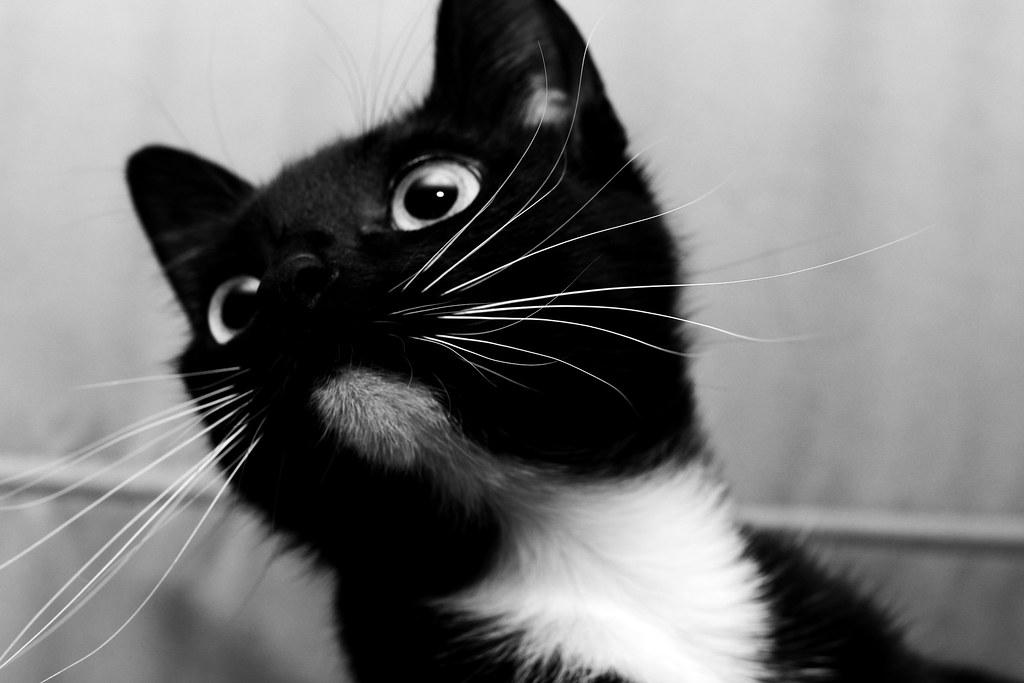 Photoshoot Cats Cintha Shot By Jeffrey Kerkhove Flickr