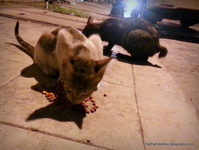 stray cats 12