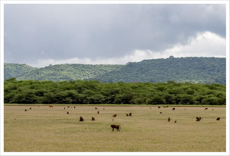 Tanzania-13