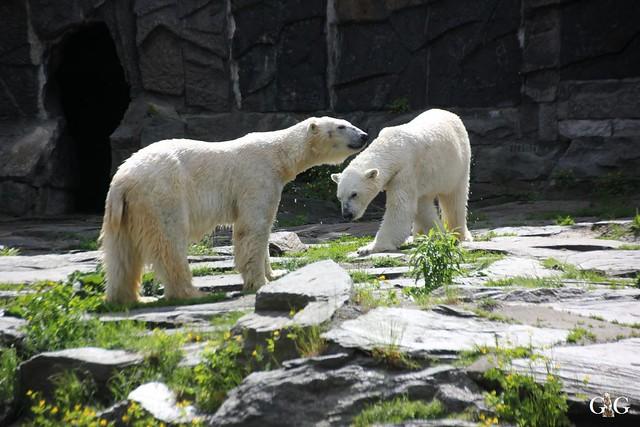 Tierpark Friedrichsfelde 17.05.20159