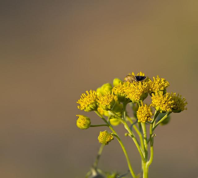 Wild Flower 7d_1958