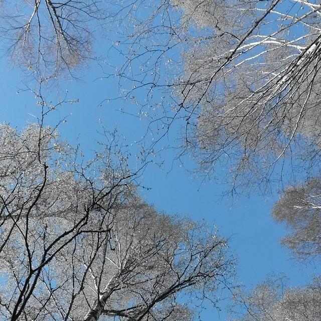 puut, Hämeenlinna, Suomi
