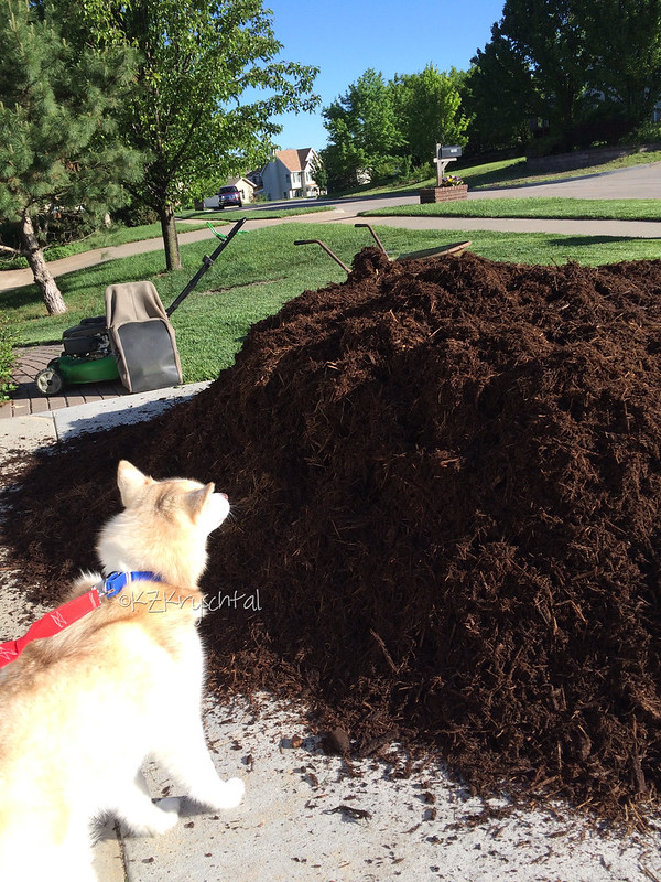 IMG_7678MagsMulch