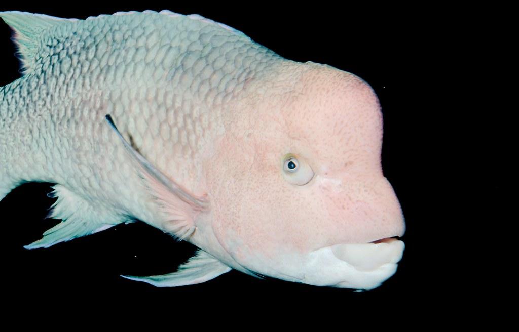 Fish_104